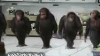 Прикольное поздравление от танцующих обезьян. Смешно!
