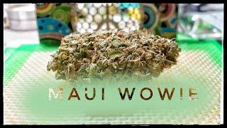 Video Strain Review - Mw - Maui Wowie - MMJ Total Health Care download MP3, 3GP, MP4, WEBM, AVI, FLV Agustus 2018