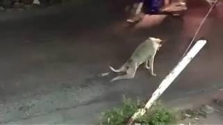Жалко собаку :(