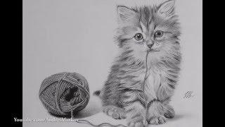 Как рисовать кошку карандашом