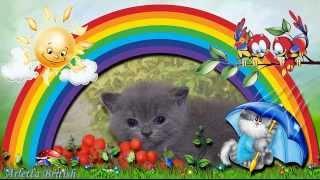 """Британские котята. Питомник британских кошек """"House Arletta British"""""""