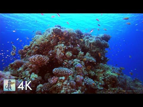 4K CORAL REEF AQUARIUM ~ RELAXING  FOR SLEEP STUDY MEDITATION & YOGA ~ 4K OCEAN SCREENSAVER