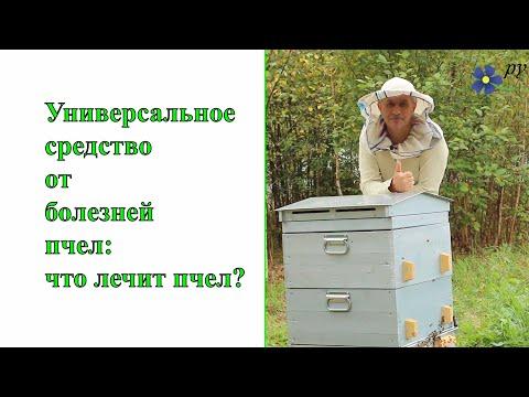 Универсальное средство от болезней пчел: что лечит пчел