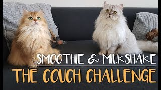 Not Cleaning The Couch For THREE Days - Smoothie The Cat
