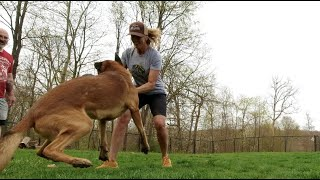 DOG OWNER? This is a MUST WATCH, Amazing Dog Training Results #1070