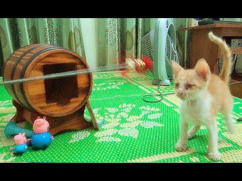 Cats And Dogs Playing Fruit Ninja