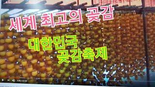 제9회 대한민국 곶감축제 ,세계최고의 곶감이 다 모였다…
