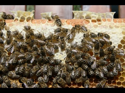Chicago To Ban Neonicotinoids & EPA's Glyphosate Discussion