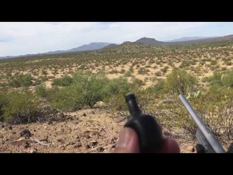 Coyote Calling In Az