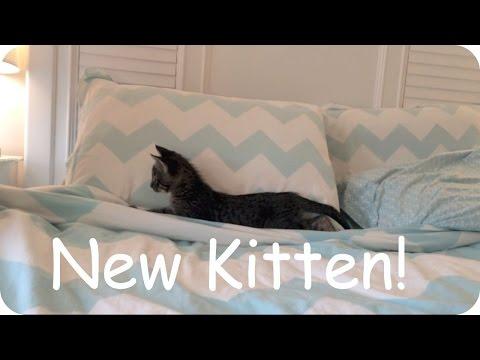 Adopting A Kitten! Vlog #12
