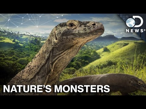 How Nature Created Unicorns, Dragons And Sea Monsters