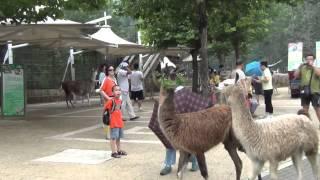 Далянь,зоопарк(Сафари парк в Далянь., 2013-08-25T04:35:36.000Z)