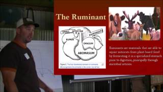 Why Grass Fed Beef? - Ruminants - The Solution (part 2)