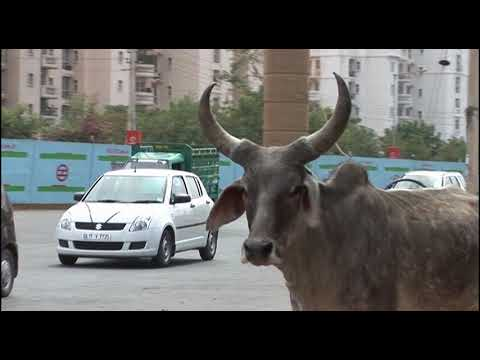 Saving The Slumdog Donkeys | FULL LENGTH | MagellanTV