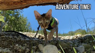 Taking Our Cat For A Walk Up The Mountain