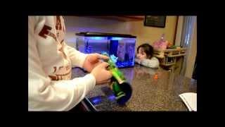 glofish aquarium set up part 2 water heater filter