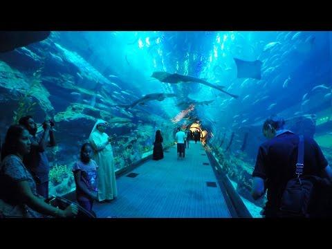 Dubai Aquarium & Underwater Zoo, Akwarium w Dubaju [oglądajcie w HD]