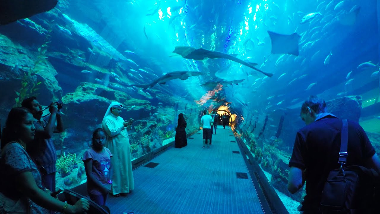 Dubai Aquarium & Underwater Zoo, Akwarium w Dubaju [ogl?dajcie w HD ...