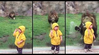 Schockierende Tierangriffe auf kamera aufgenommen