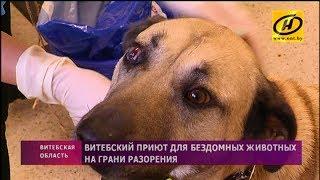 Почему витебский приют для бездомных животных оказался на грани разорения?