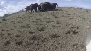 RESOLVE Drone Used to Rescue Elephant thumbnail