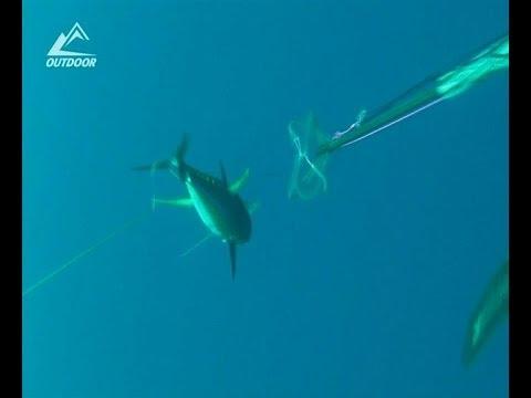 Подводная охота на тунца Spearfishing tuna