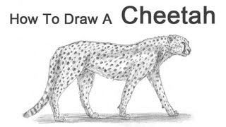 How to Draw a Cheetah(Visit http://www.How2DrawAnimals.com or my channel for more animal drawing tutorials and don't forget to PAUSE the video after each step to draw at your own ..., 2012-11-27T08:35:55.000Z)
