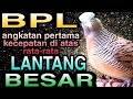 Perkutut Lokal Gacor Full Ngayer  Mp3 - Mp4 Download