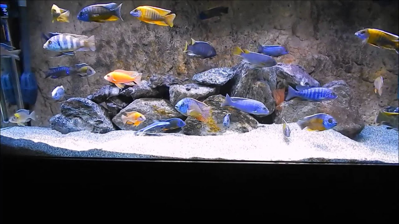 3d aquarium fish tank background feature rock - Universal Rock 3d Backgrounds