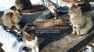 Смотреть всем Выживание кошек в Сибири help survive homeless cats