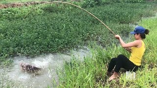 Best Girl Fishing Giant Gourami Fish After Huge Storms