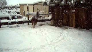 Snow in Dallesport