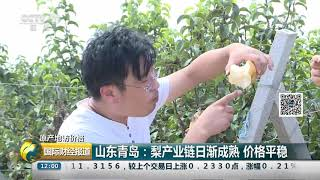 [国际财经报道]原产地访价格 山东青岛:梨产业链日渐成熟 价格平稳| CCTV财经