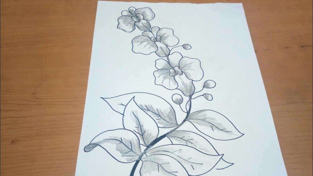 Sketsa Bunga Anggrek Untuk Batik Youtube