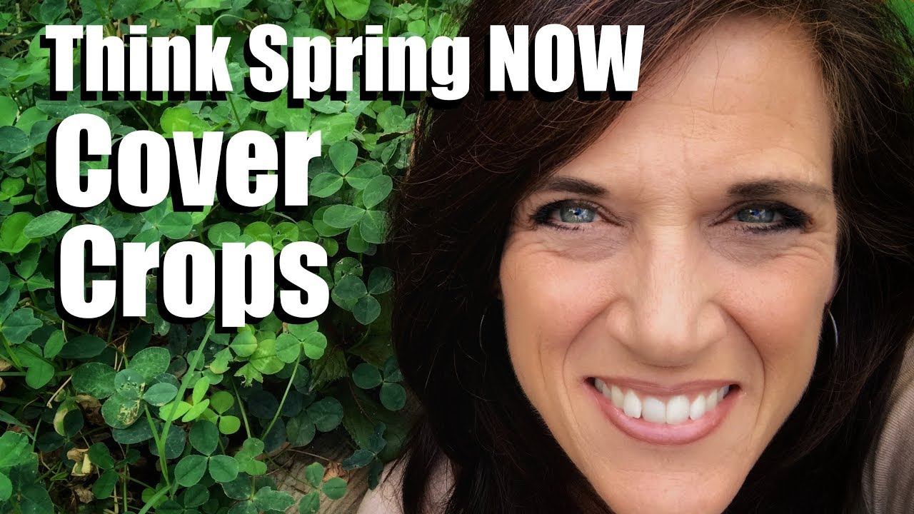 think spring now plant a cover crop in your backyard garden youtube