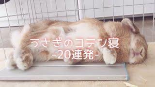 可愛い♡うさぎコテン寝20連発!【Sleep so that the rabbit suddenly collapses】