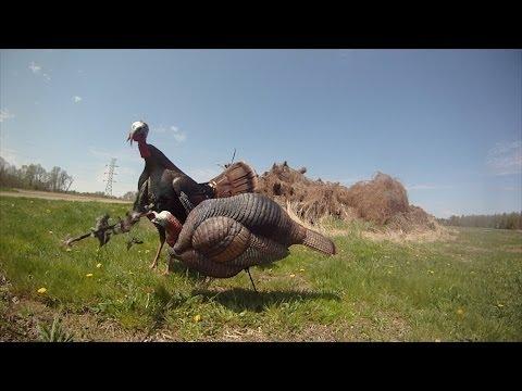 Bowhunting Turkeys
