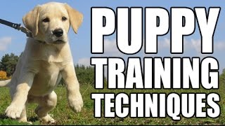 Puppy Training : Tips And Techniques From A Professional