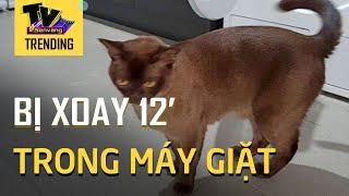 Chú mèo sống sót sau 12' ở trong máy giặt đang hoạt động