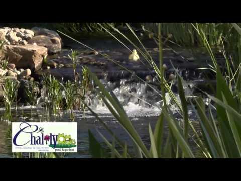 Chalily Pond & Garden