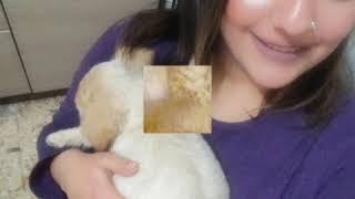 Gençlik virüsünden kurtulan köpek Kızım PONÇİK