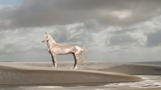 15 Breathtakingly Unique Beautiful Horses | You Can't Believe which are Really Exist in The World