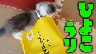 【実は福岡発祥】子猫、東京銘菓「ひよ子」販売員になる【はがね先生】