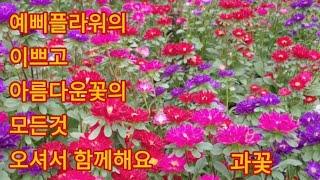 440회. 예삐플라워의 예쁜꽃과 가격알아보기.