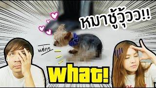 หมาชู้วู้วววว-ได้ด้วยหรอ-ฟูจิจะชู้วู้วโชว์กล้องแบบนี้ไม่ได้น้า