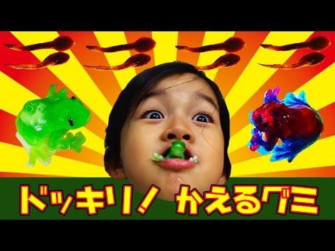 まーちゃんにドッキリ!今日のおやつはリアルなカエルとおたまじゃくしグミ!カエルの卵もあるよ☆himawari-CH