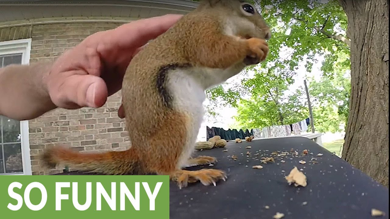 Squirrel Makes Hilariously Adorable Sounds While Eating YouTube - Cat squirrel playing cutest thing youll see day