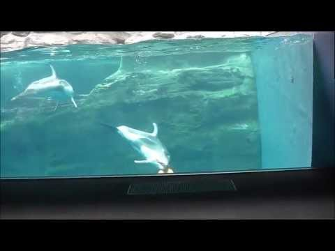 Osaka Aquarium Kaiyukan 海遊館