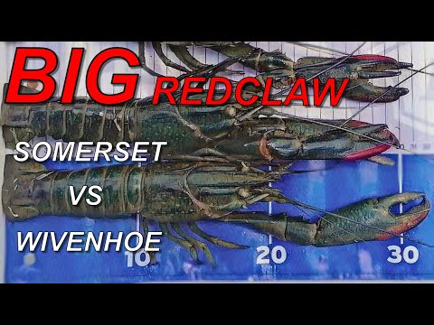Redclaw Somerset Dam Vs Wivenhoe Dam Which Has The BIGGER (How To Catch Yabbies/Redclaw)
