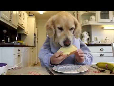 Funny Dogs Eating Like Humans Compilation